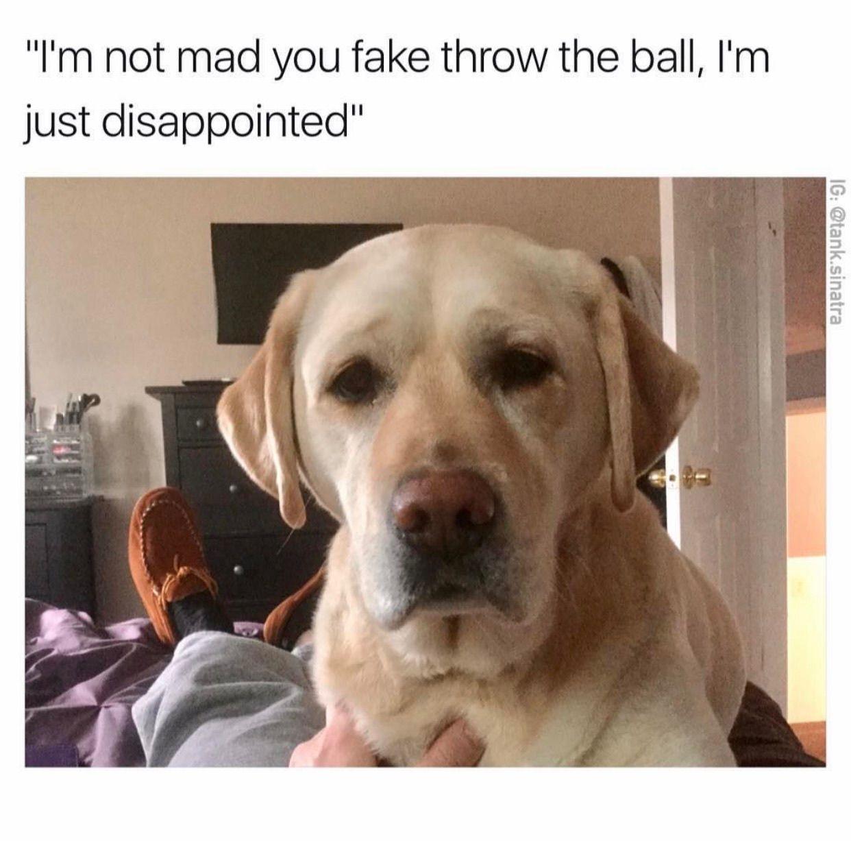 47 Of The Dankest Memes Of The Week