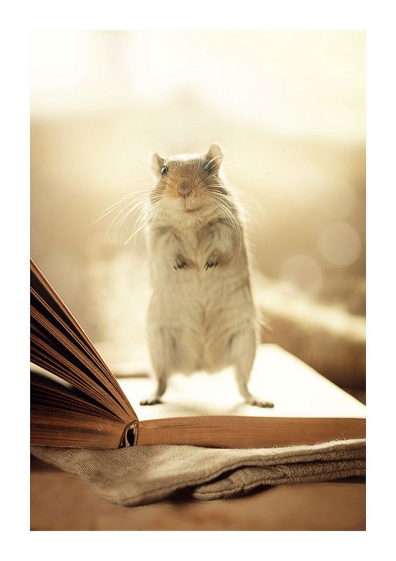 Do You Mind Reading Me A Book Gerbil Animal Books Cute Animal