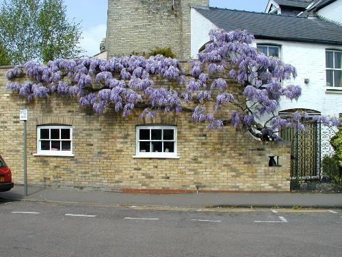 Idyllic Street life scenery in Cambridge (Lower Park St).