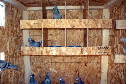 free pigeon loft plans | Pigeon Coop Design | animal stuff | Pigeon