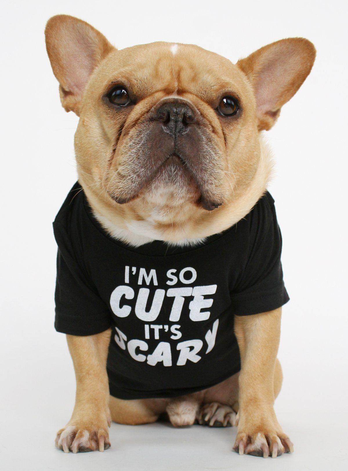 I M So Cute It S Scary Dog Tee Dogs Tee Dog Shirt Bulldog