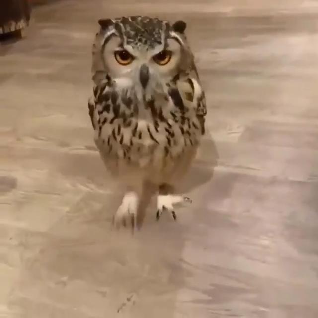 Y'all ever saw a owl run