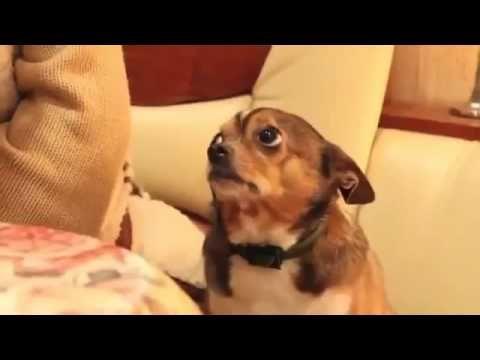 Perrito A Punto De Llorar Tras Ser Reganado Por Su Duena Pobre Perro Gif De Perros Perros