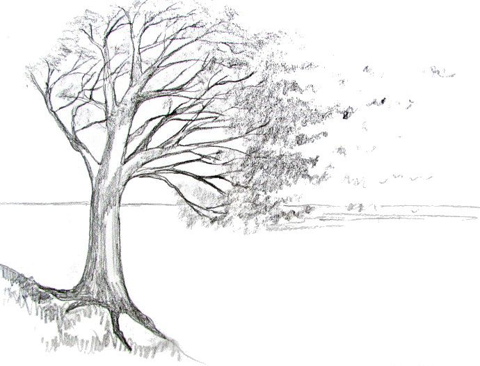 how to draw a tree drawing drawings landscape drawings landscape drawing tutorial. Black Bedroom Furniture Sets. Home Design Ideas