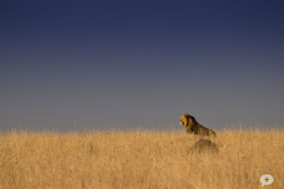 Lion on Horizon by Marc Jager on 500px