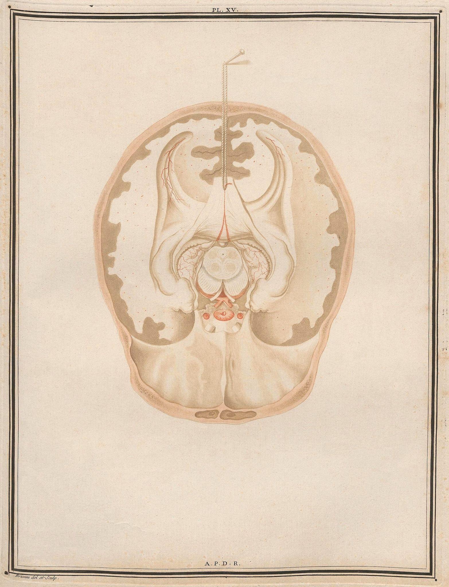 Traité d\'Anatomie et de Physiologie (Vol. 2 neuroanatomy) by Félix ...