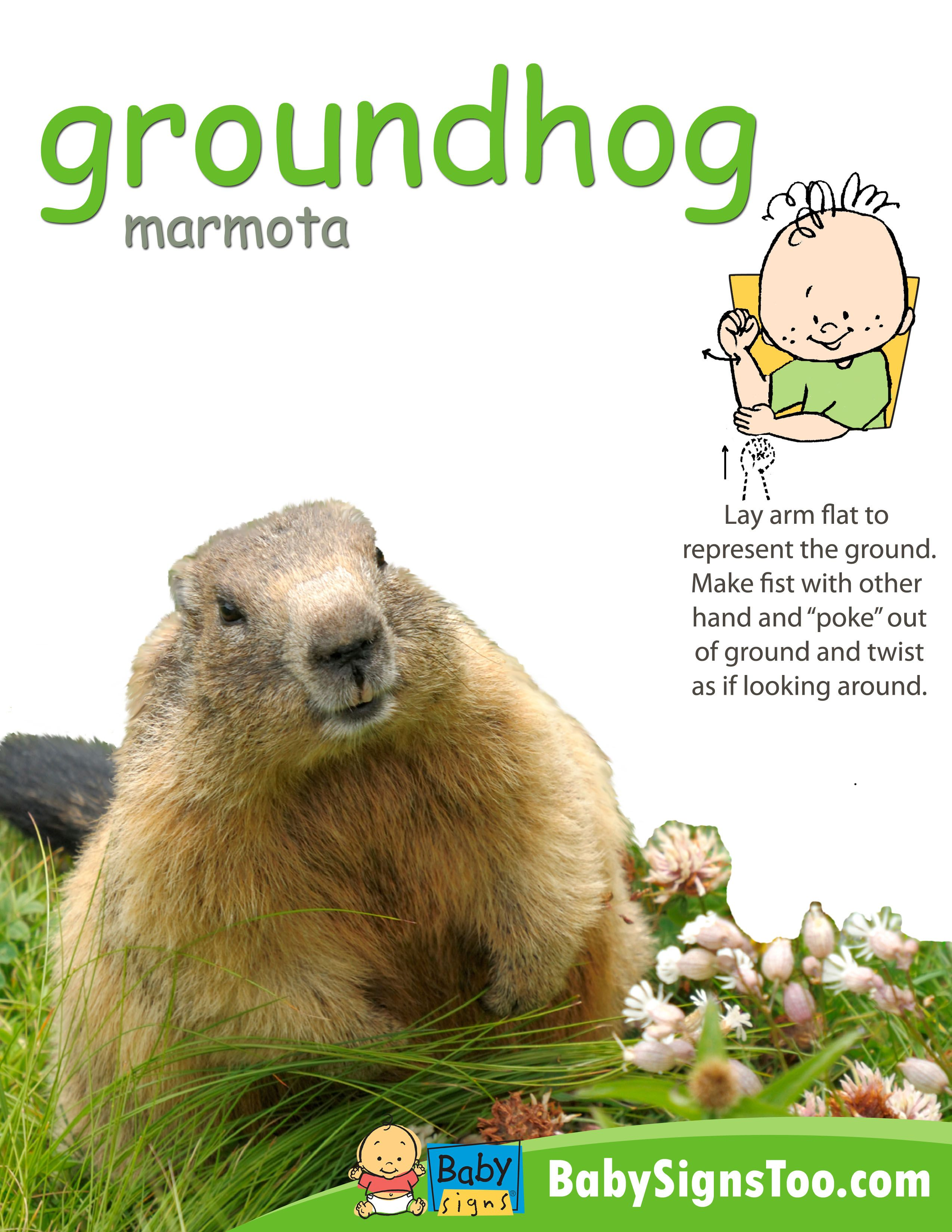 free poster with the asl sign for groundhog www babysignstoo com