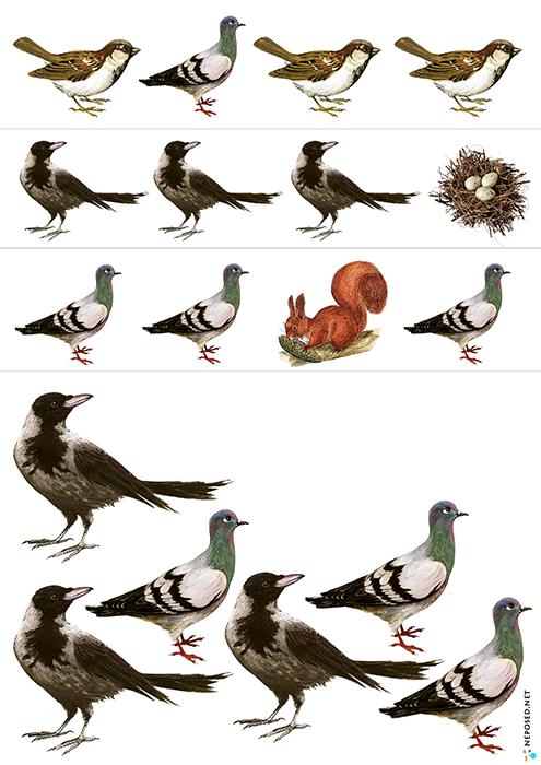 Zanyatie S Malyshami Pticy Pticy Deti Obuchenie