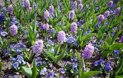 Blog Post: Planting a Spring Garden Tips & Tricks