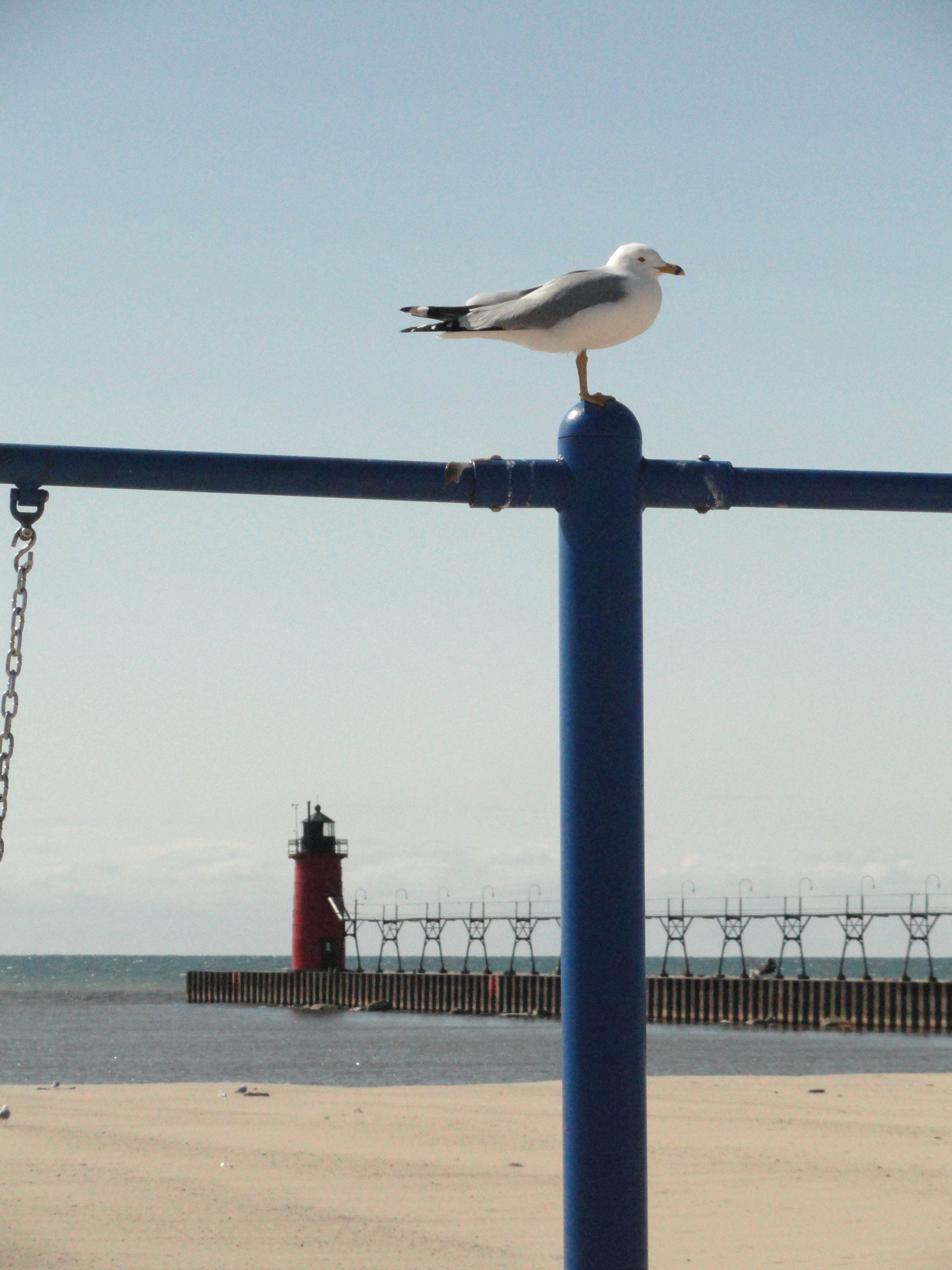 Beach Lighthouse Gull On Playground At South Haven Michigan Photo By Sandy Carlson
