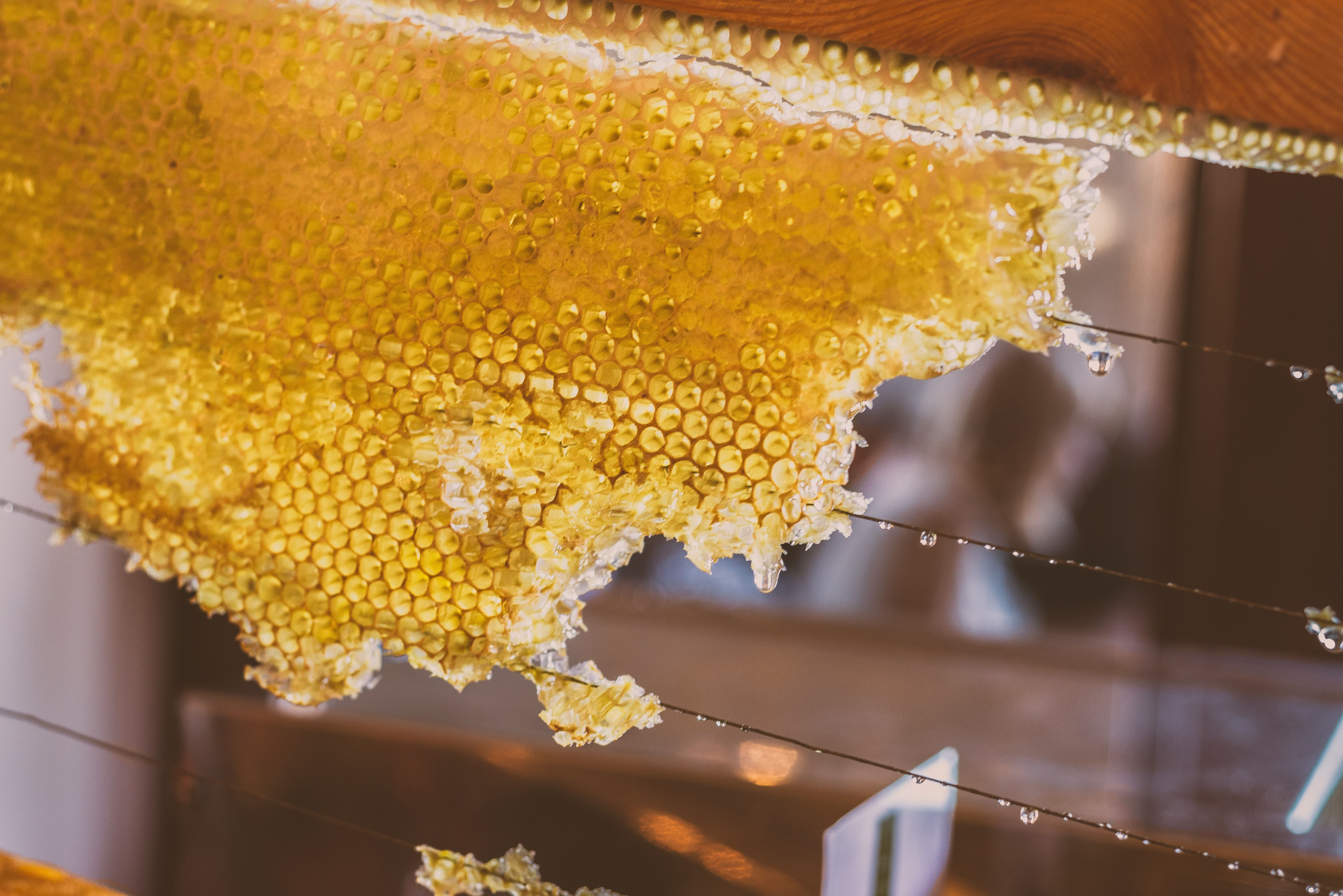 Pin By Bulwark Exterminating Pest Con On Bees In 2020 Honey Pictures Beeswax Raw Honey