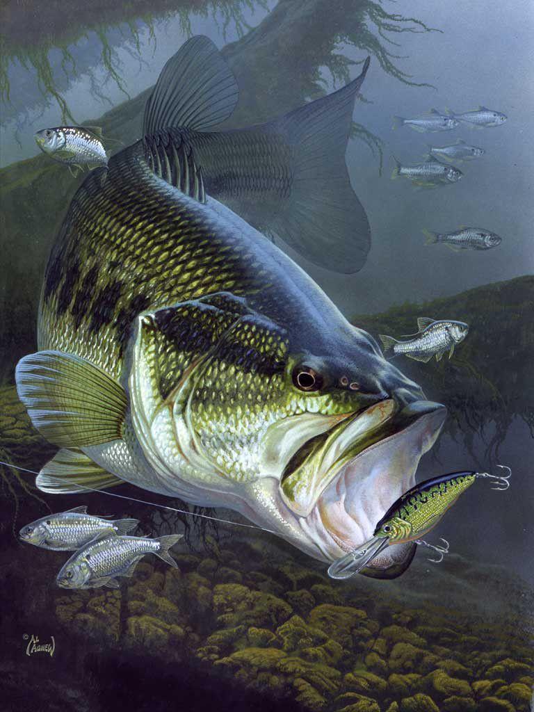 Freshwater fish art - Explore Kayak Fishing Fishing Tips And More