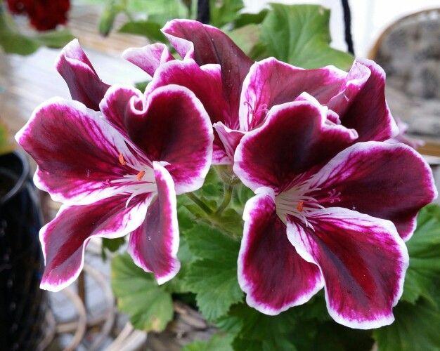 blommor på engelska