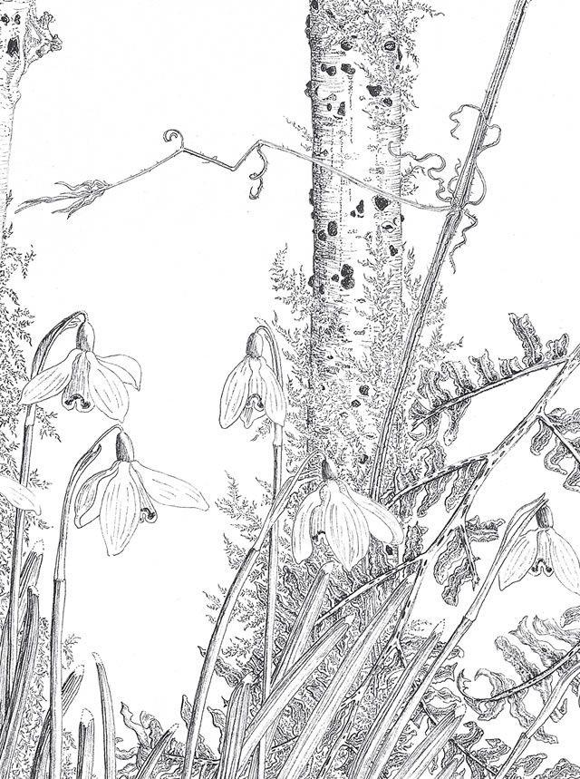 catharine nicholson botanic artist | Catharine Nicholson – Botanical Artist