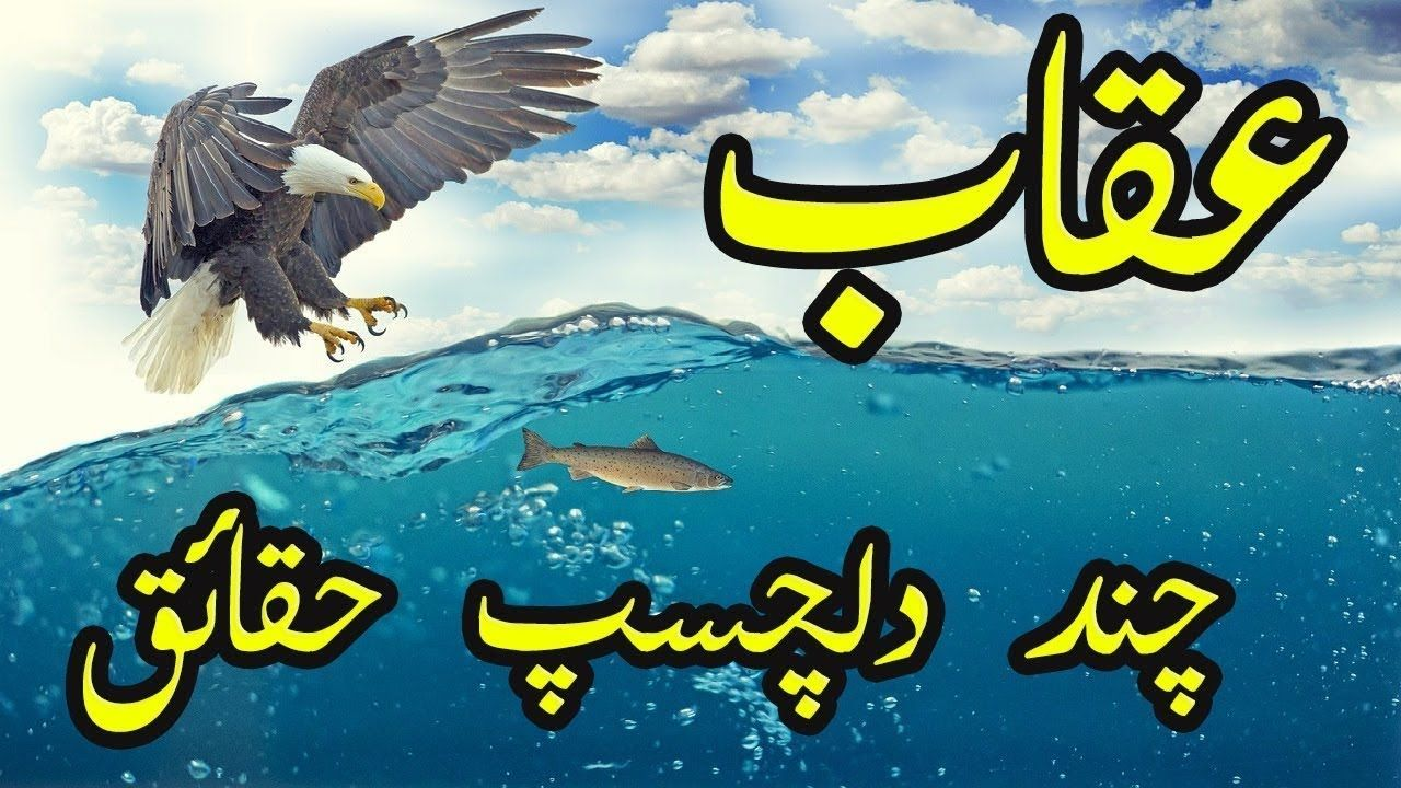 11 Interesting Facts About Eagles in Urdu/Hindi by Info Global