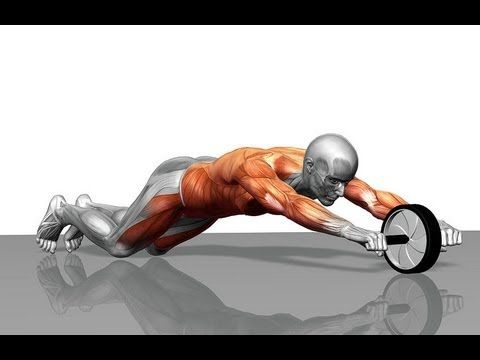 Image result for ab roller muscle gif