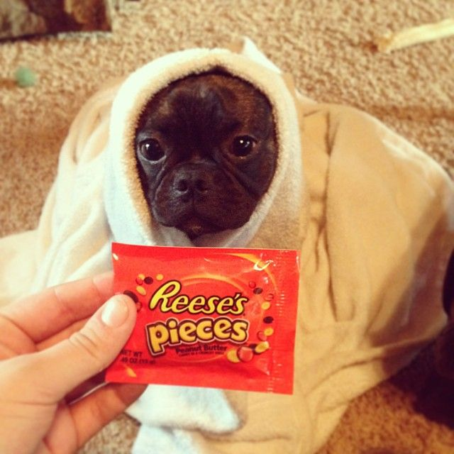 "@half_shot_candice's photo: ""ET phone home #et #dog #halloween #halloweencostume #funny #reesespieces"""