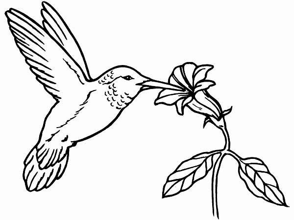 Xantus Hummingbird Coloring Page Kids Play Color Di 2020