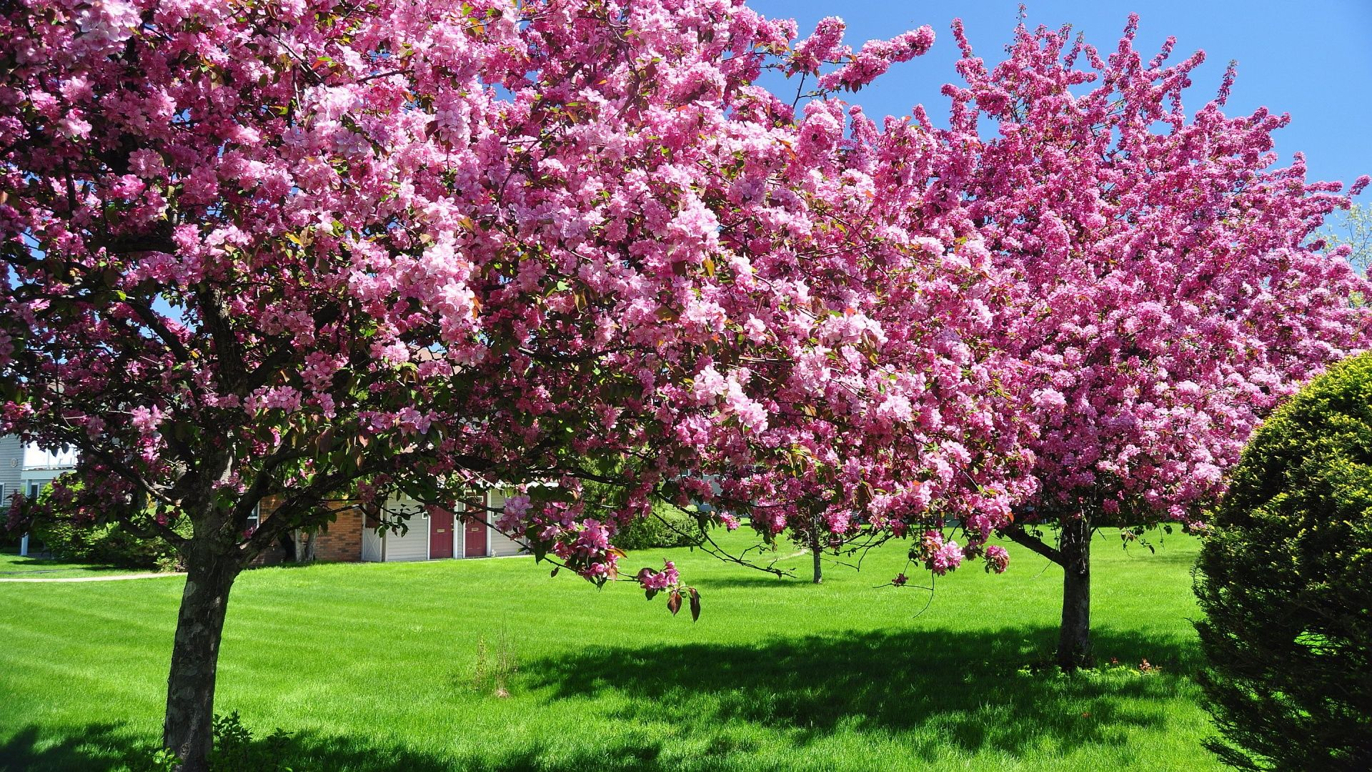 Spring HD Wallpapers Wallpapers Pinterest Árvores