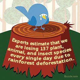 deforestation facts - Google Search | deforestation | Pinterest ...