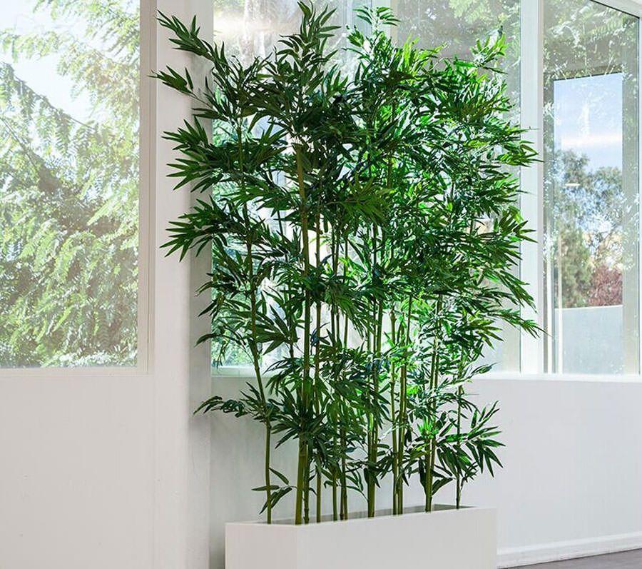Idee per arredare il salotto con piante da interno - Pianta da ufficio ...