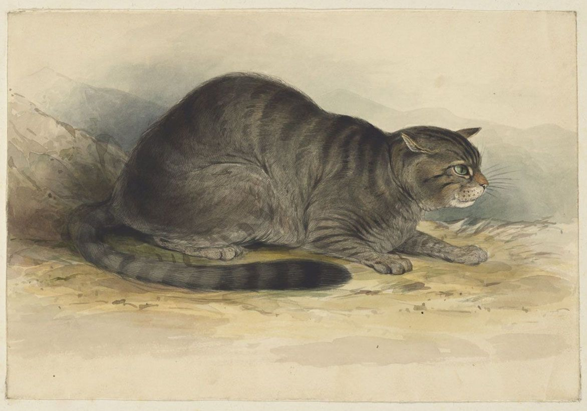 Lear, Edward, 1812-1888. Wild cat.MS Typ 55.13 (25)Houghton Library, Harvard University