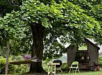 Nice shades: 7 Fast growing shade trees to slash your electric bill