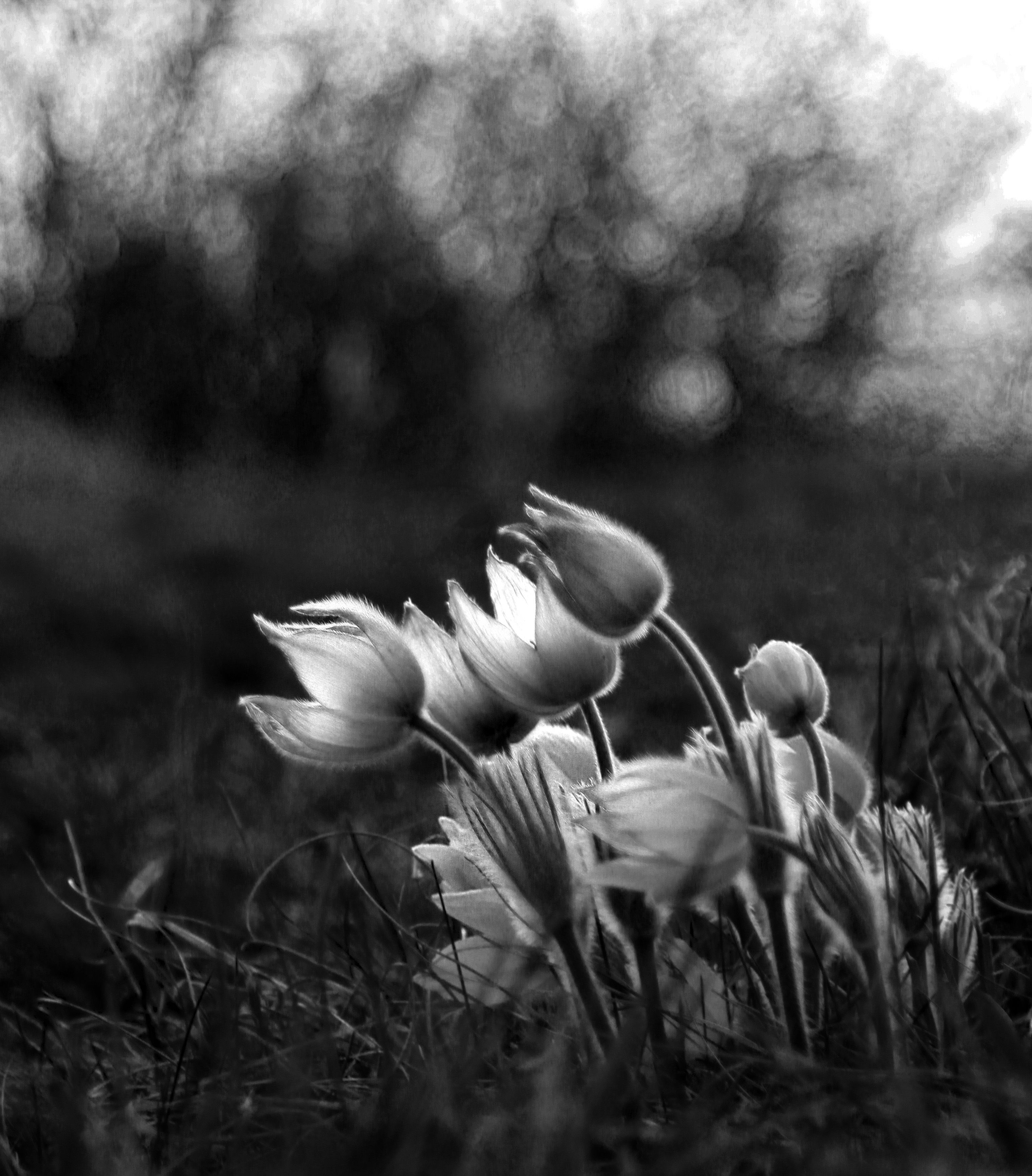 Black And White Flowers Flowers Blackandwhite Nature