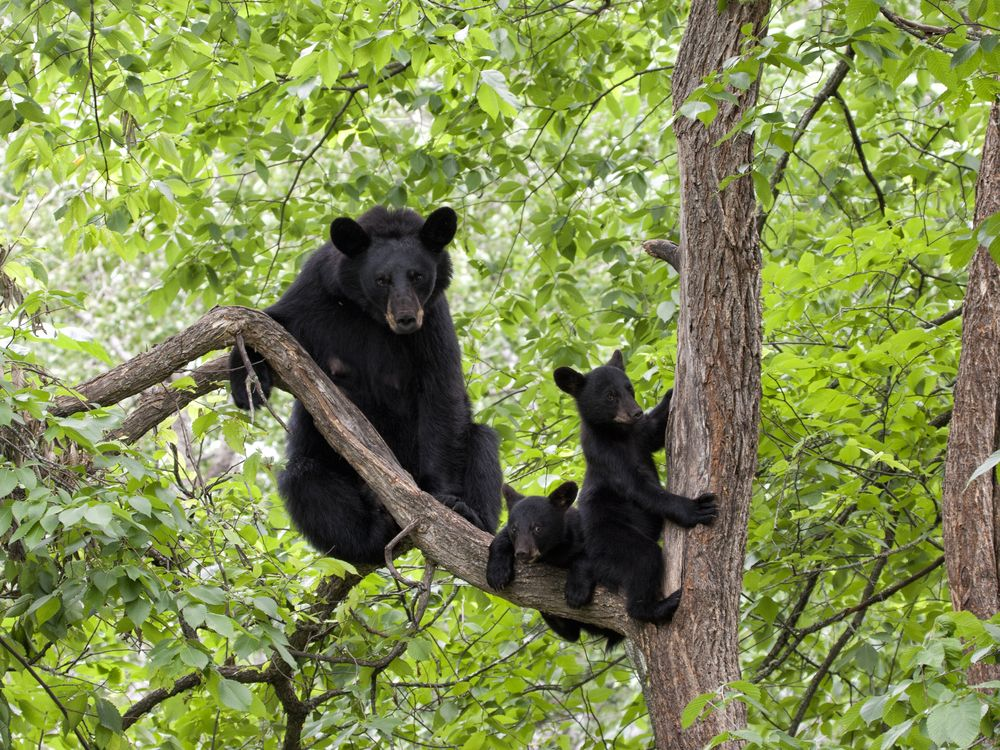 We love our Smoky Mountain bears. One of the best ways to