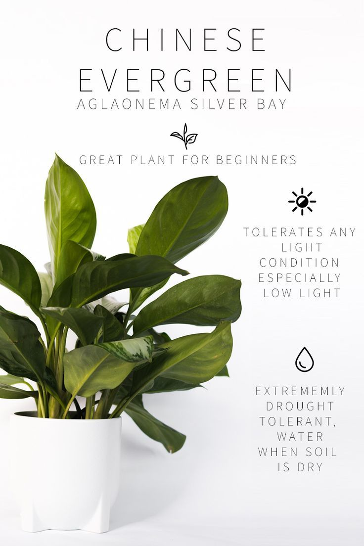 Master List of Low Light Indoor Plants is part of Plants, Indoor plants, Inside plants, House plants indoor, Low light plants, Outdoor plants - The BEST low light indoor plants and how to care for each of them! If you want unique and easy to care for low light plants, this is the ultimate list!