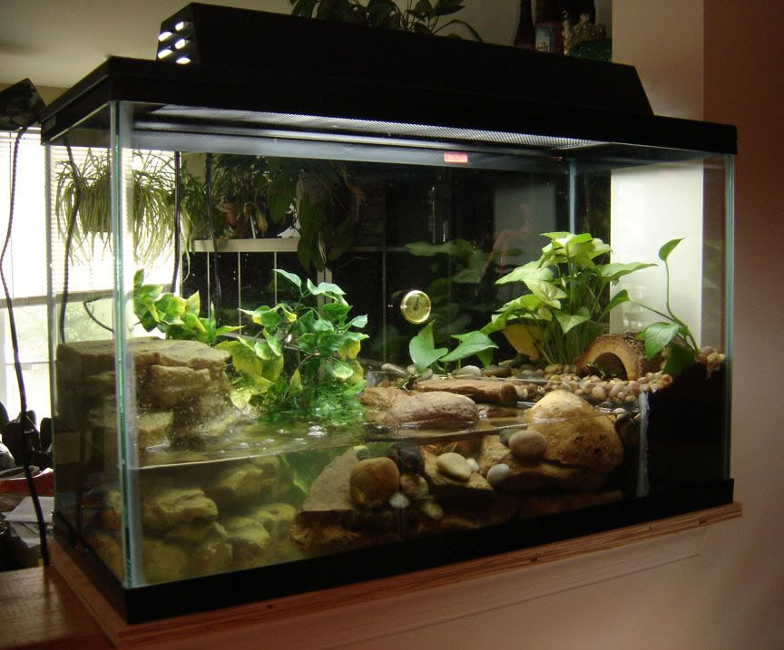 Fire Belly Toad Tank Setup Post Your Firebelly Toad Tank