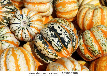 tiger stripe pumpkin or squash - Bing images