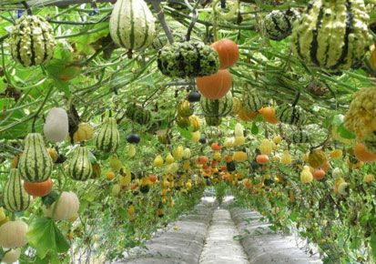 container vegetable gardening methods to create container vegetable garden kerala latest news