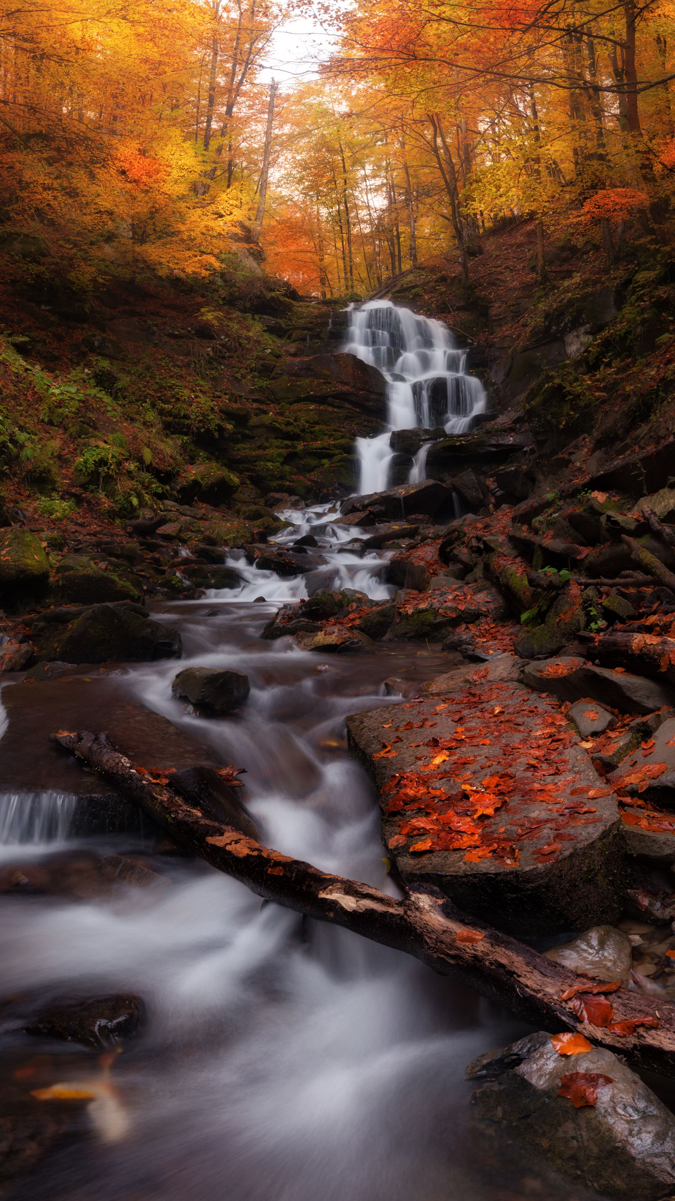 2160x3840 Autumn Forest Water Current Waterfall Nature Wallpaper Autumn Forest Forest Waterfall Waterfall