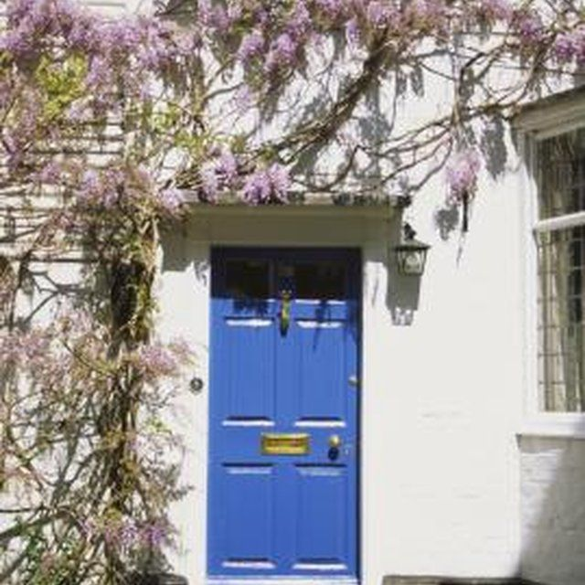 Without regular pruning, wisteria will produce more foliage and less blooms.
