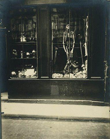 Zoologist's Shop, Paris c. 1926 by Eugéne Atget