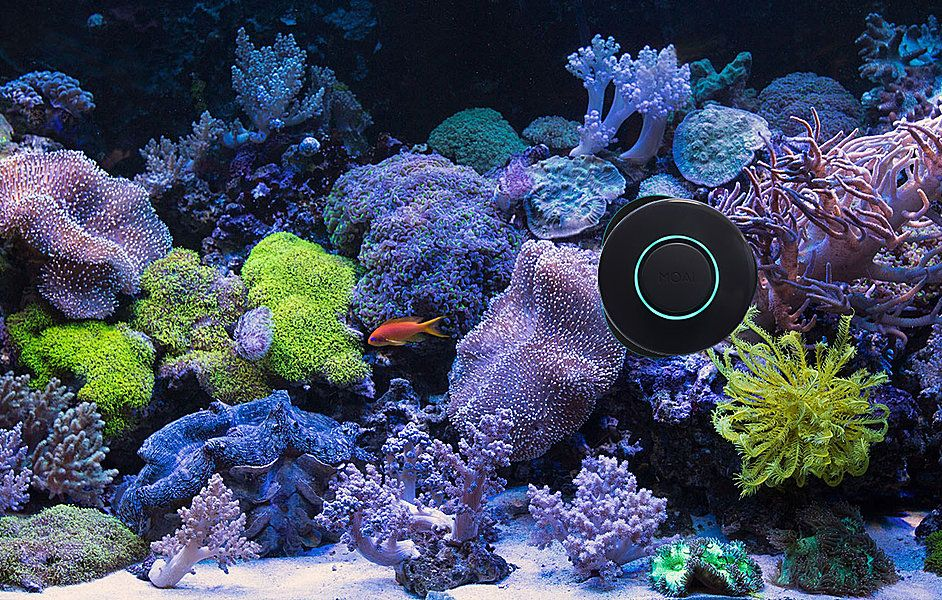 Moai aquarium reef fishtank algae cleaner smart robot for Moai fish tank cleaner