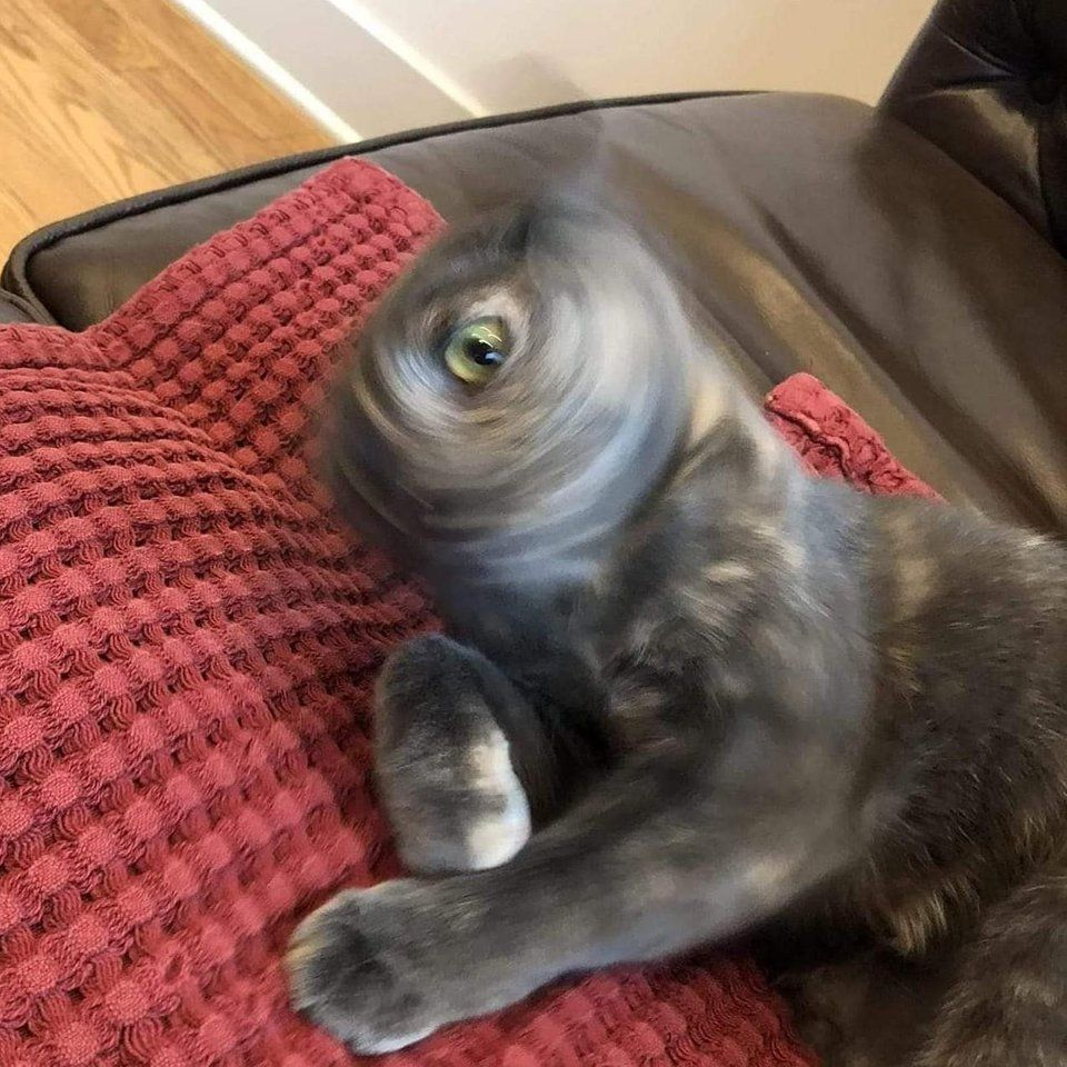 Void the One Eyed Cat Bossfight Cat memes, Funny cat