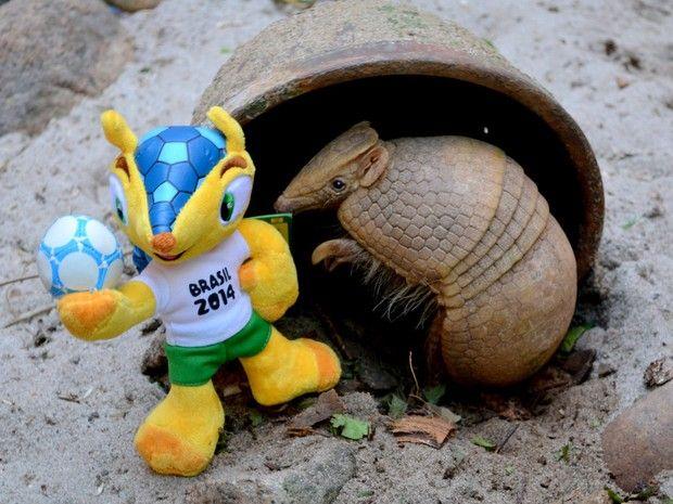 Tatu-bola 'posa' ao lado do mascota da Copa, o Fuleco (Foto: Esther Nazareth / RioZoo / Divulgação)