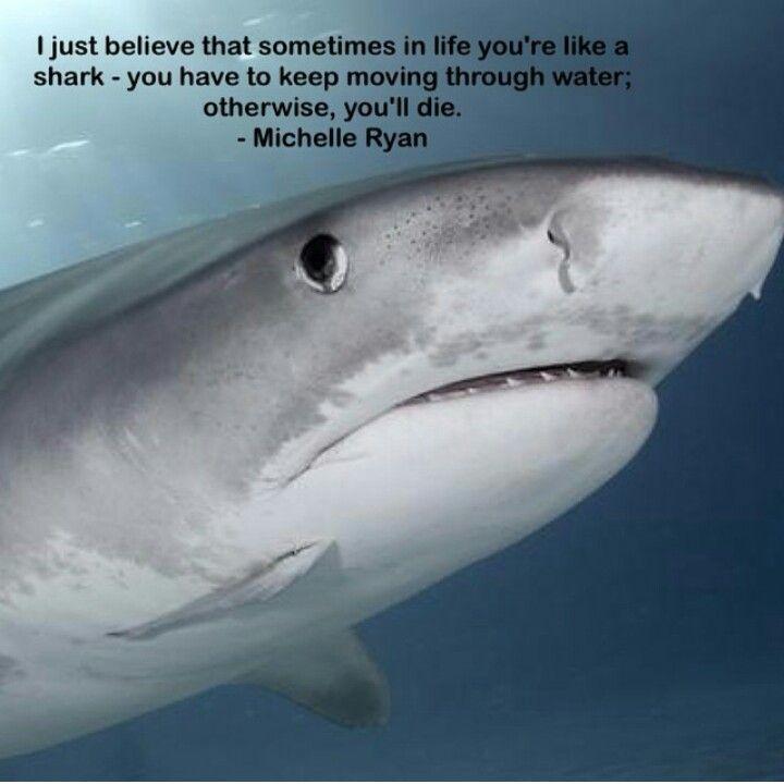 #sharkfact #MichelleRyan