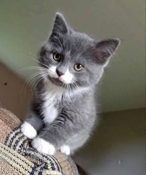 Tiny Cute Cats And Kittens Cute Cats Photos Cute Cats
