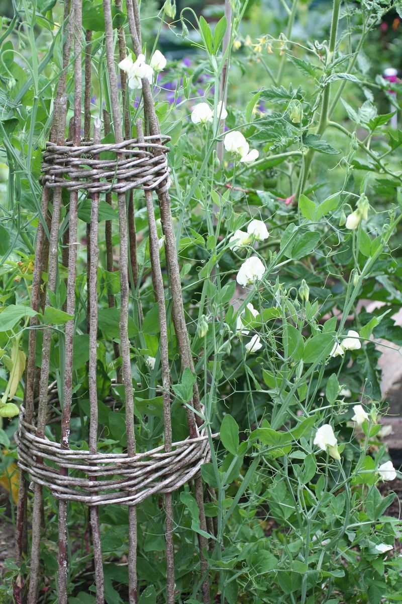 Sweet Pea Trellis Ideas Part - 39: Sweet Peas On Willow Wigwam