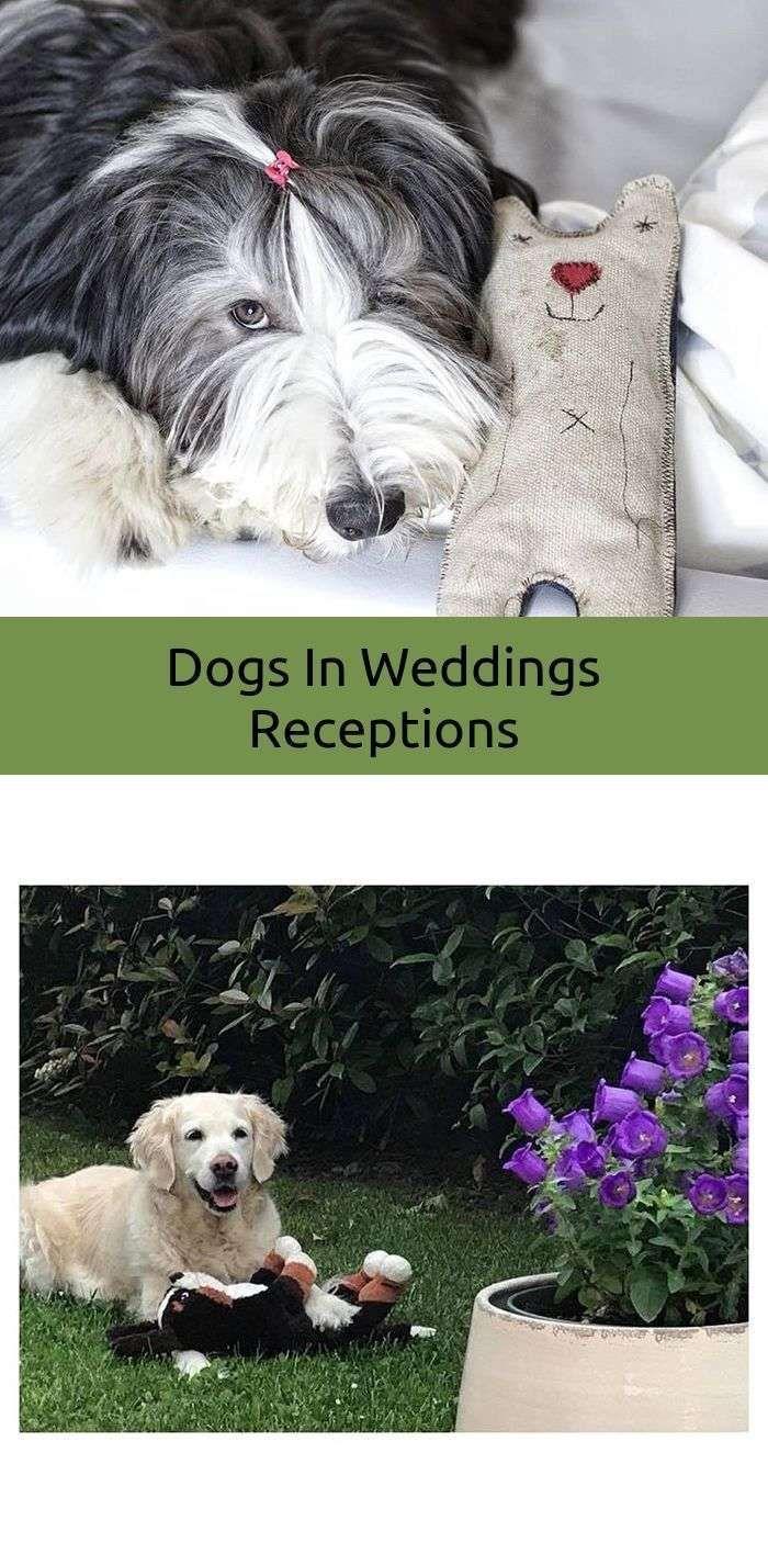 Dog Training Barking Separation Anxiety Dogseparationanxiety
