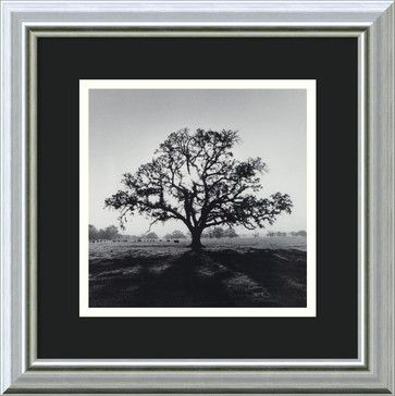 """""""Oak Tree, Sunrise, Northern California, 1966"""" Framed Print by Ansel Adams - traditional - prints and posters - Amanti Art"""