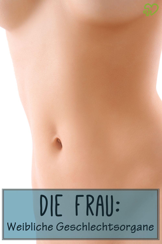 Weibliche Geschlechtsorgane – Anatomie der Frau | Anatomie ...
