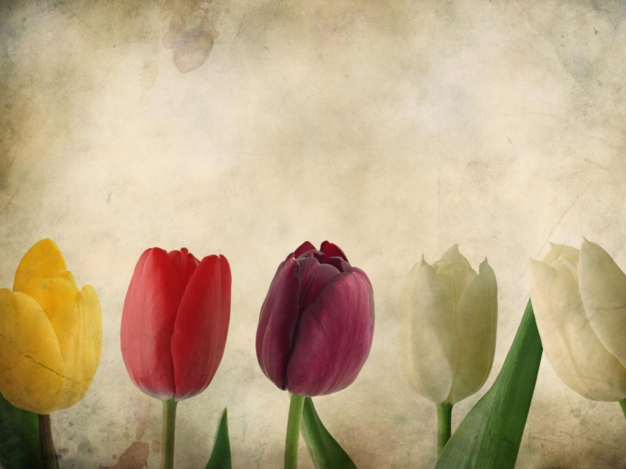 Fondos De Flores Wallpapers Hd Gratis