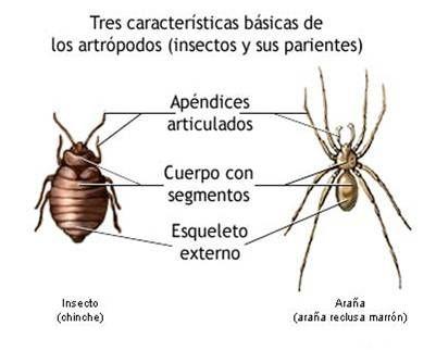 Invertebrados Los Artrópodos Educación Animales Biología Y Ciencia