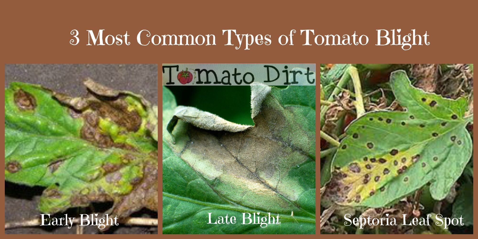 Different Kinds Of Tomato Blight And How To Tell Them 400 x 300