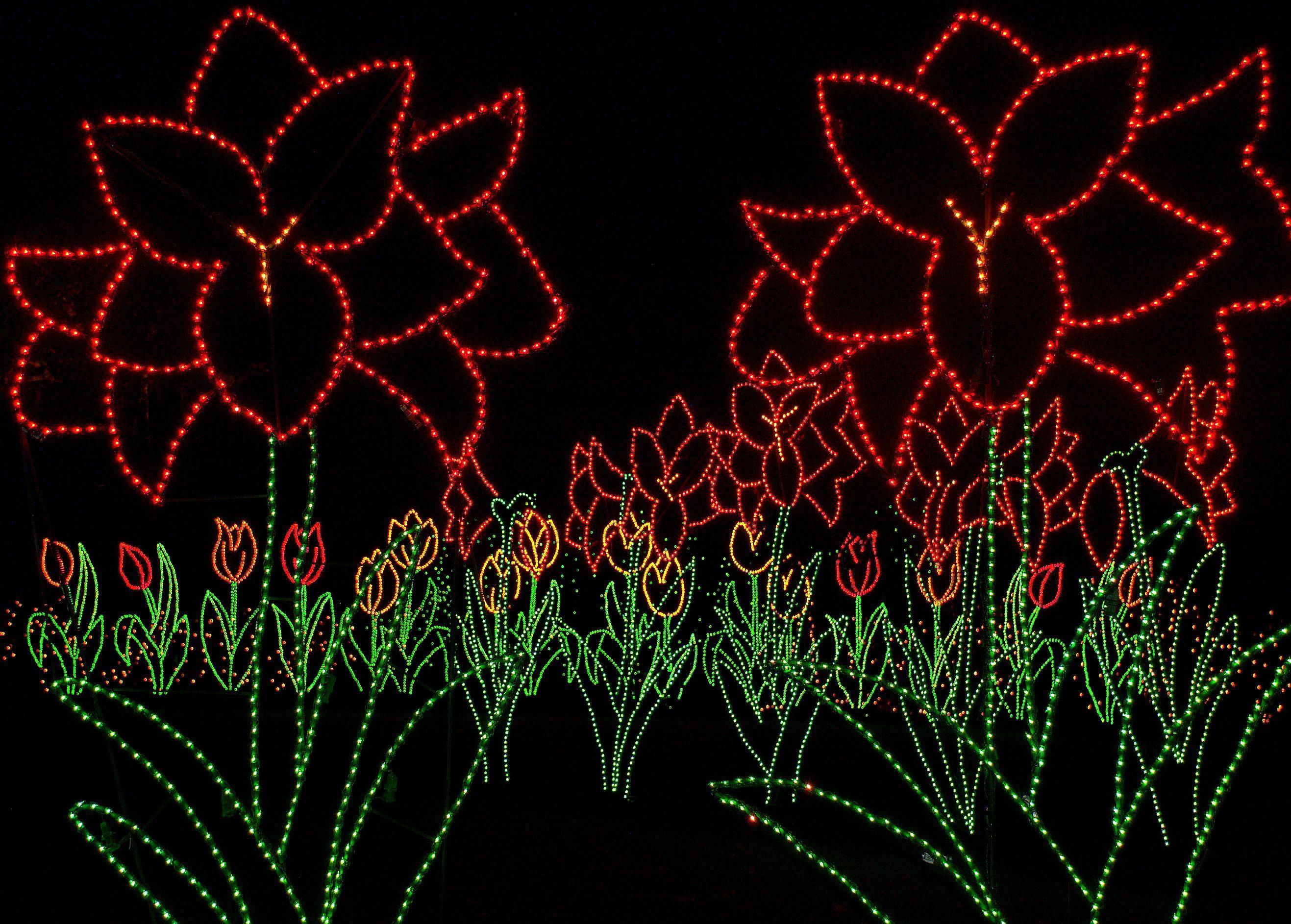 bellingrath garden oriental dragon christmas lights | Walk through the flowers at Bellingrath Gardens' Magic ...