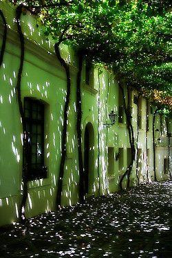 Calle emparrada in Jerez de la Frontera, Andalusia, Spain (by Carlos Solana Contreras).